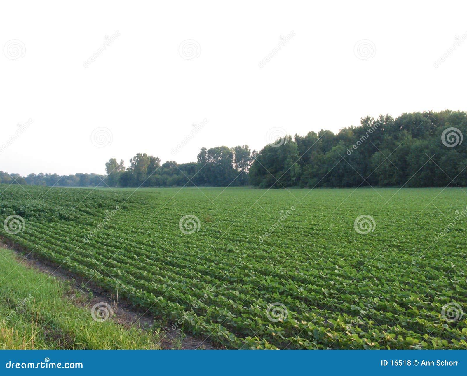 058粒威严的豆