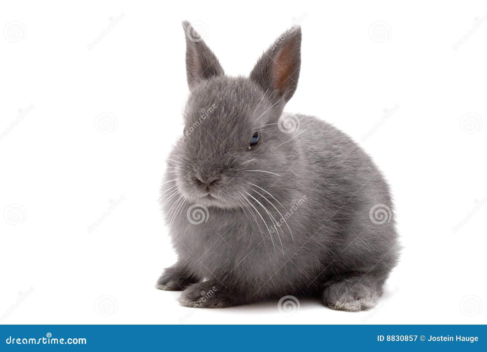 1个兔宝宝