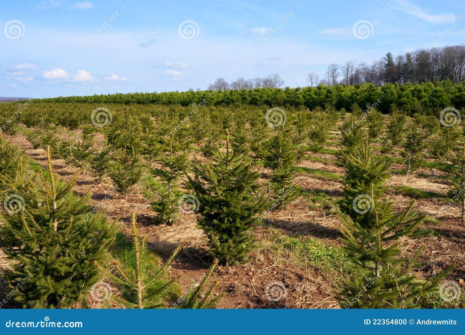 1圣诞节横向结构树
