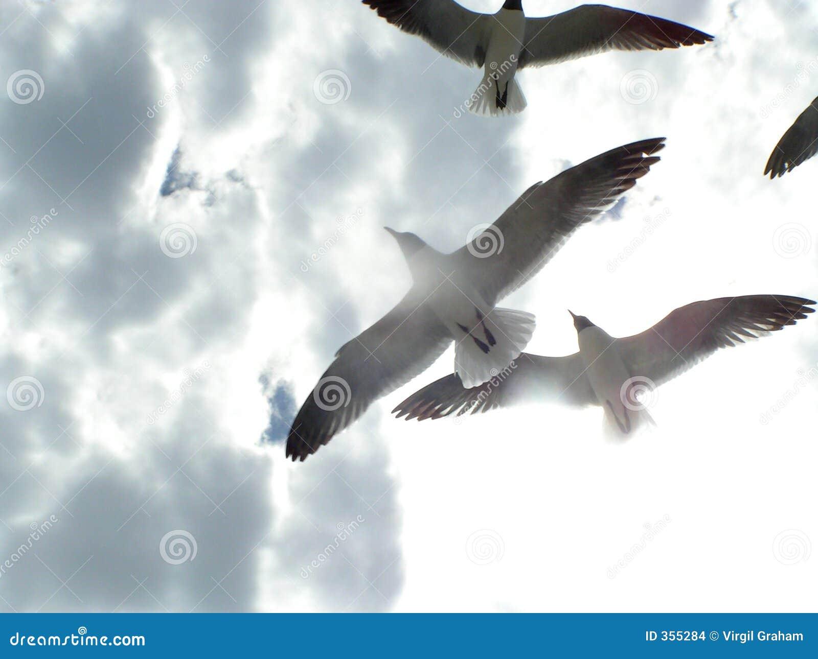 1次飞行海鸥