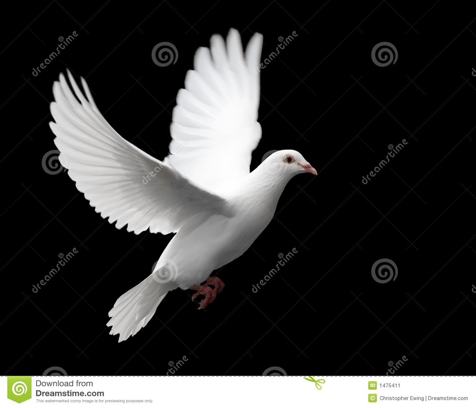 1鸠飞行白色