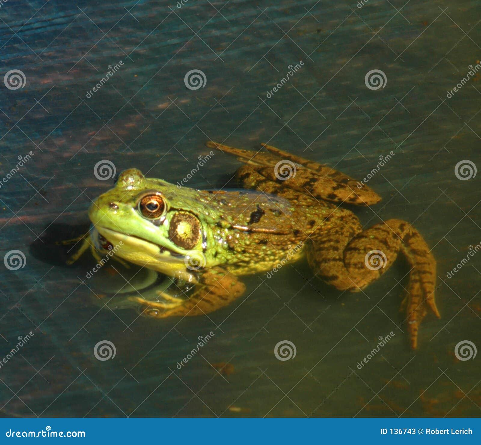 1 żaba
