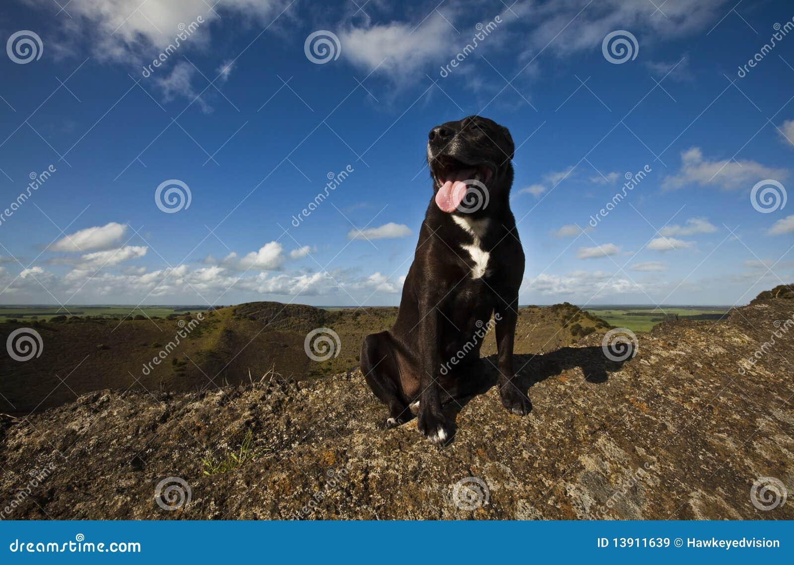 1 Διαφωτισμός σκυλιών