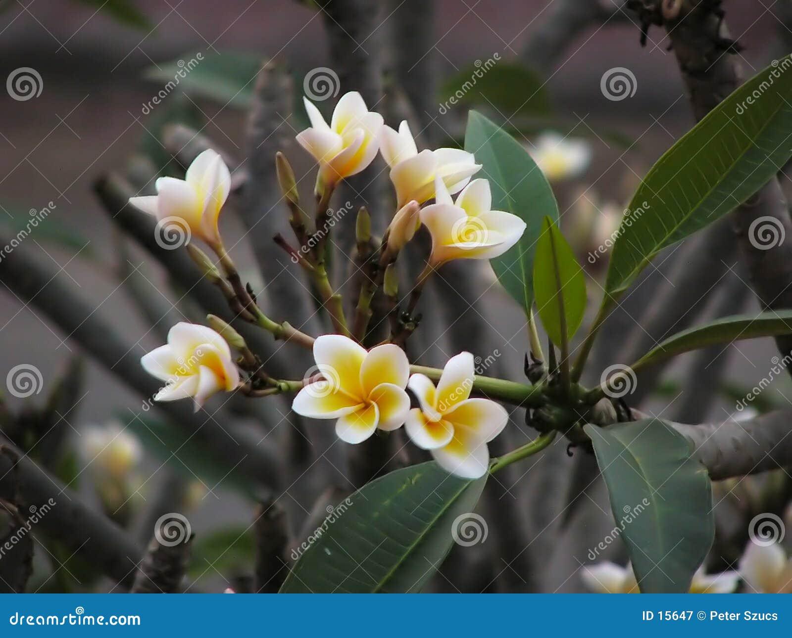 1 λουλούδι