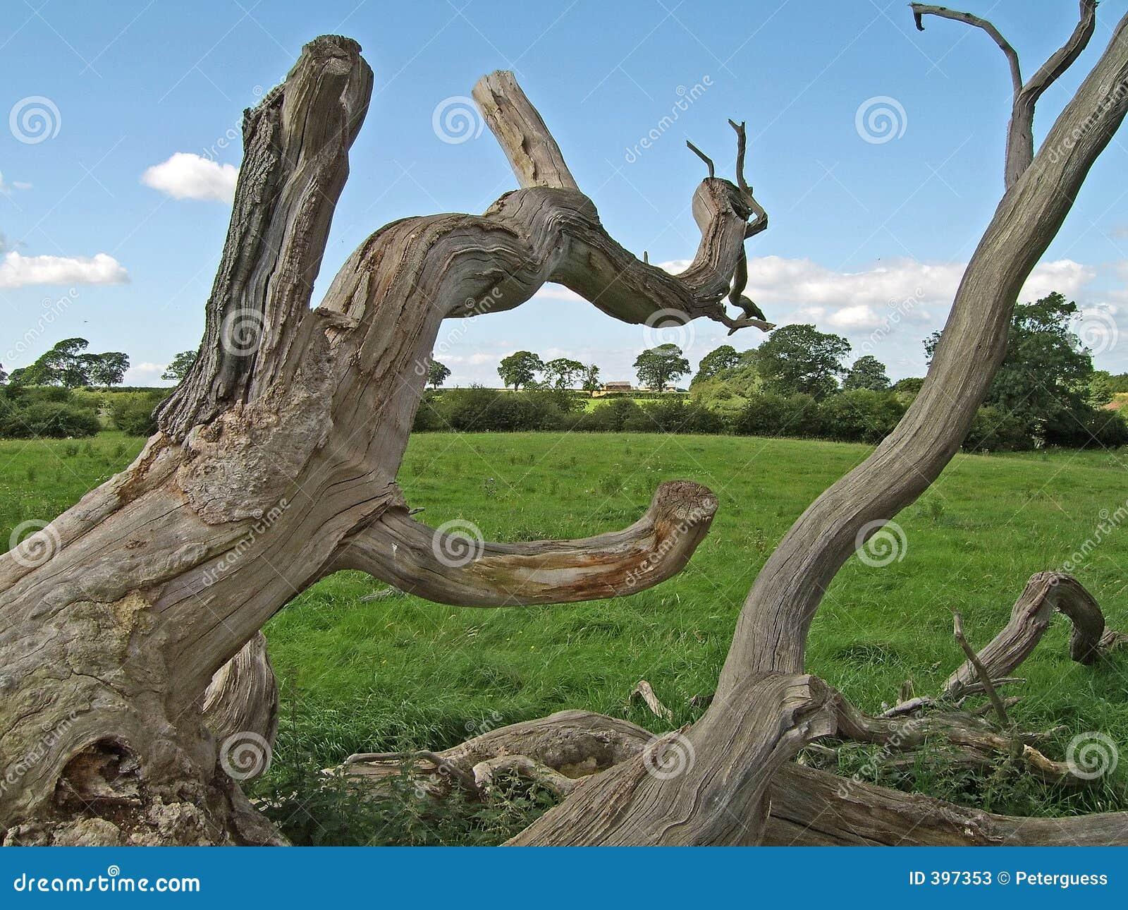 1 νεκρό δέντρο