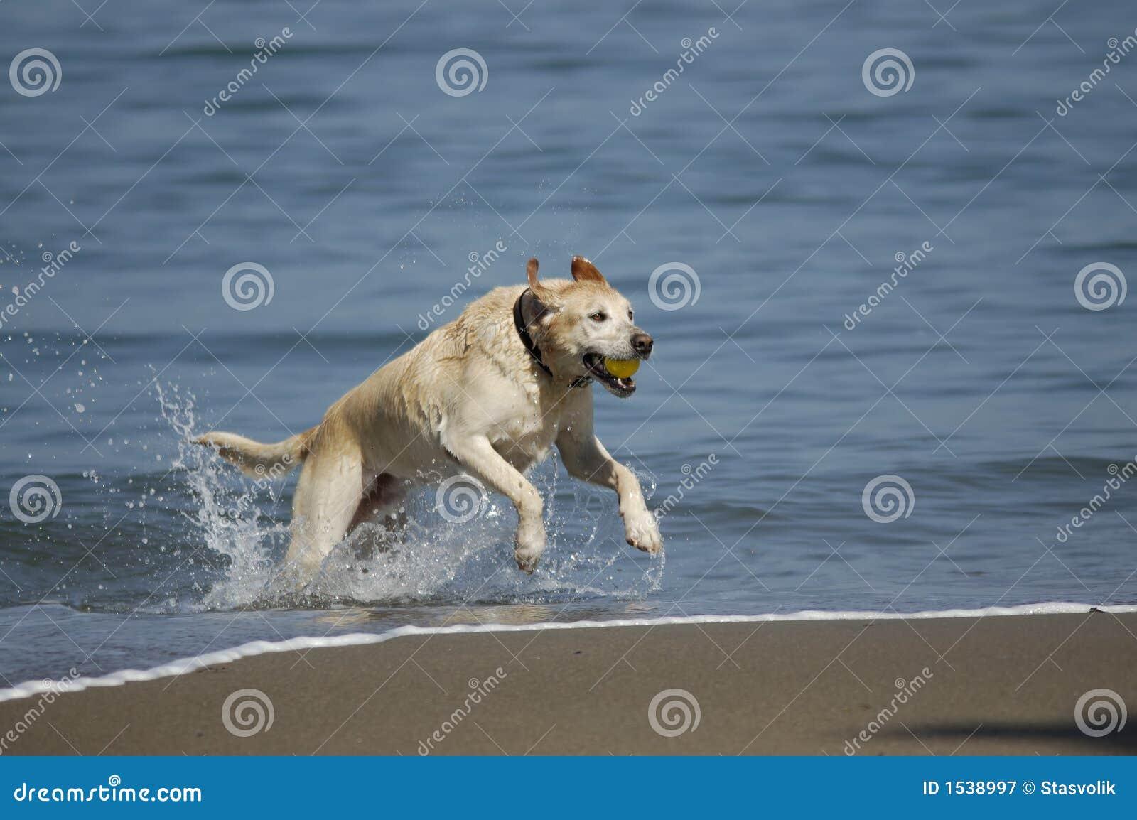 1 σκυλί Francisco κόλπων έξω που τρέχ&