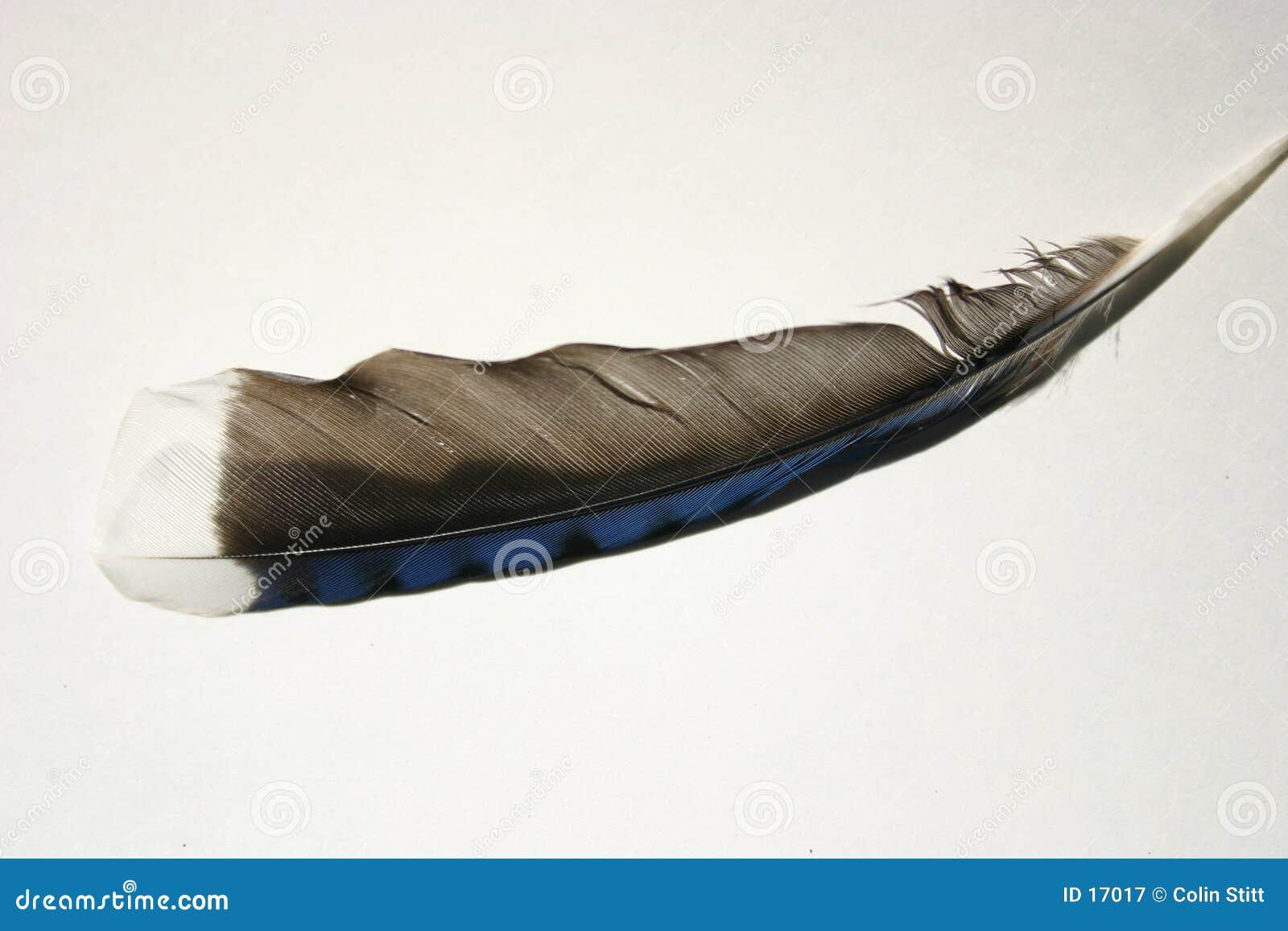 1 φτερό