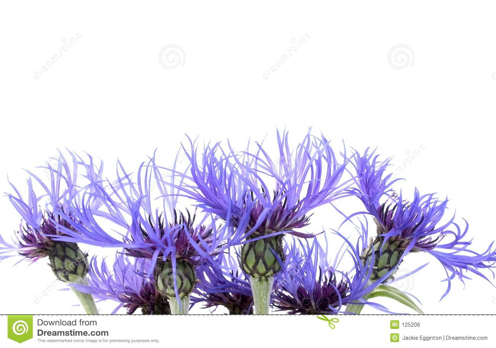 1 голубой цветок