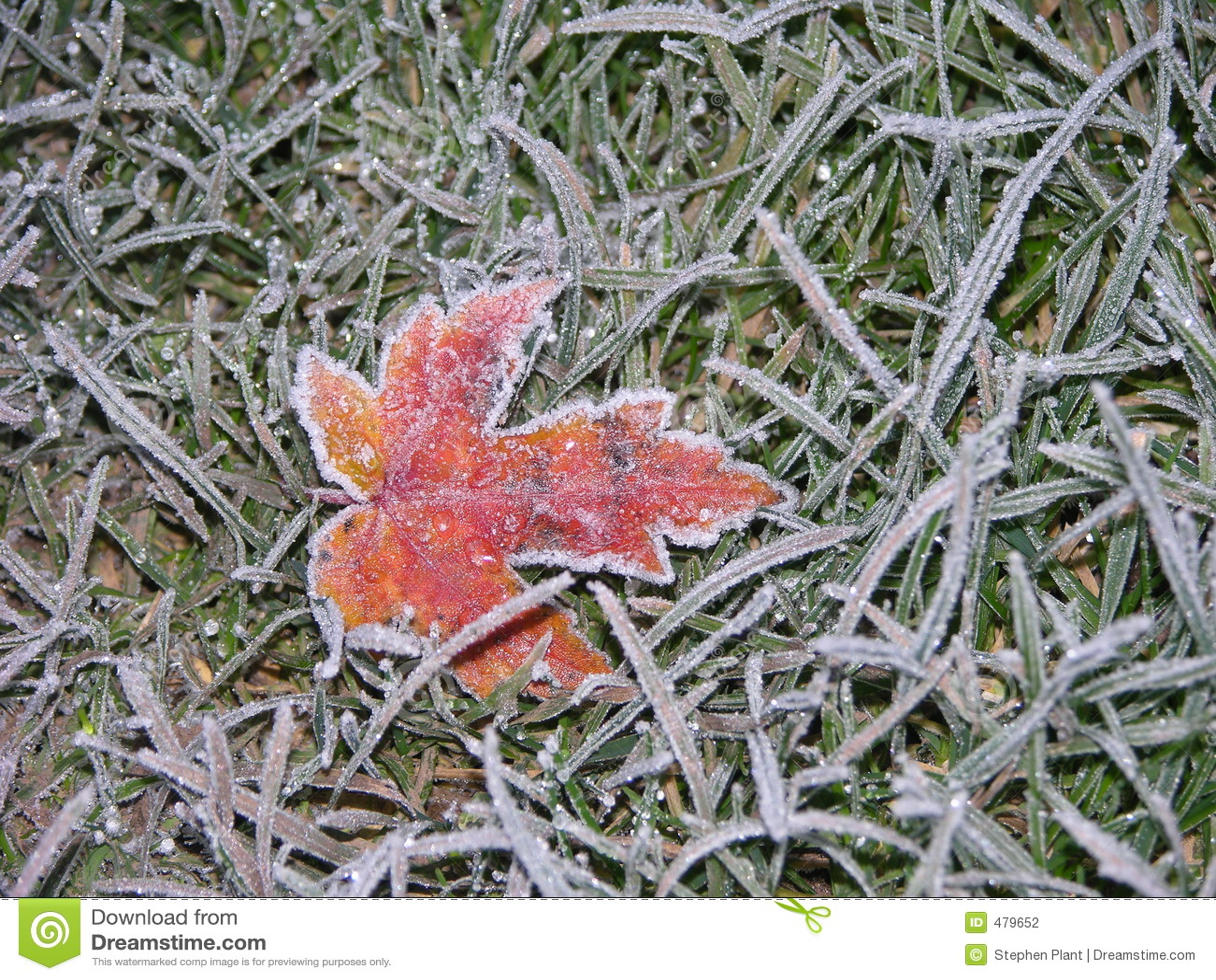 1 замороженный клен листьев