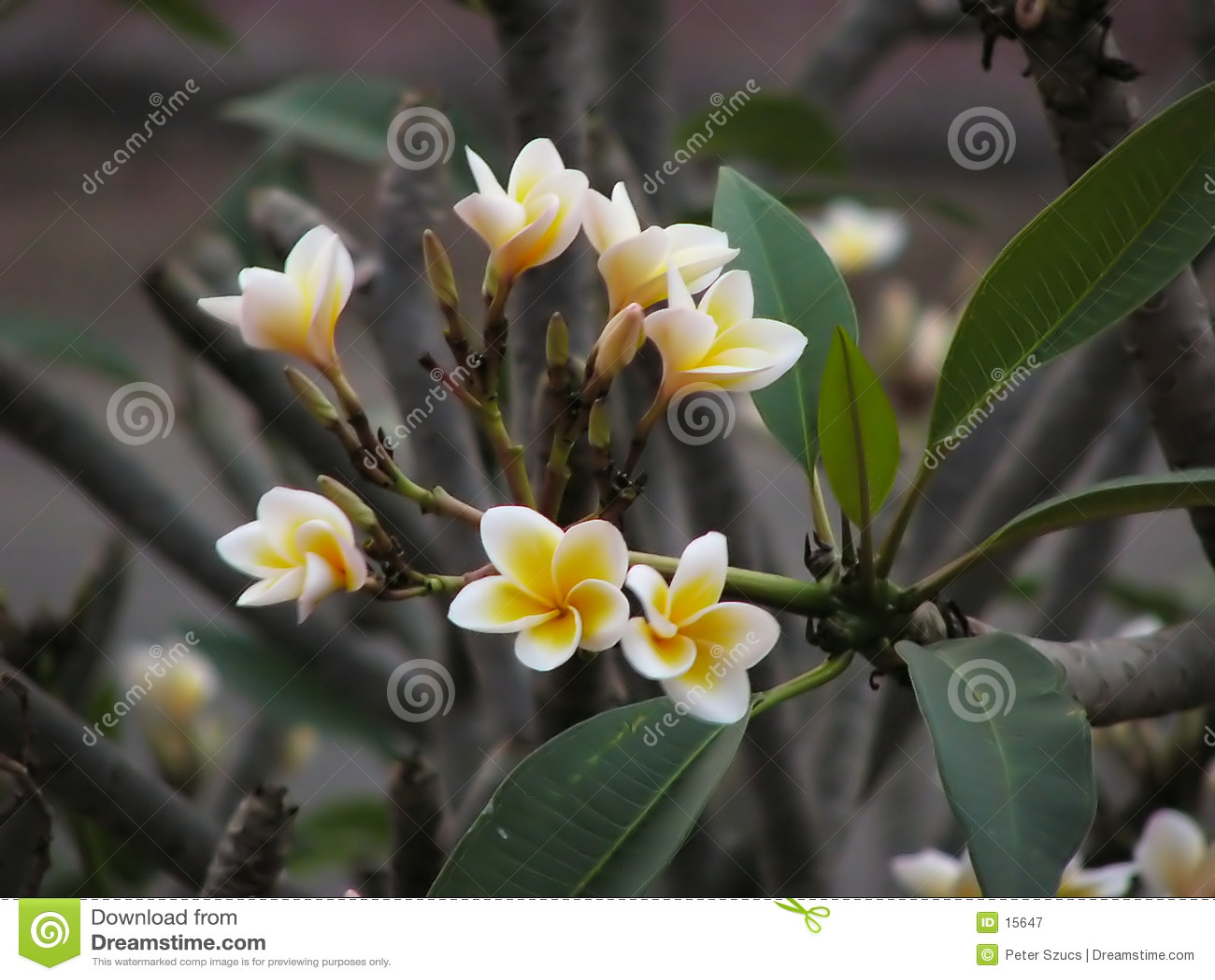 1 blomma