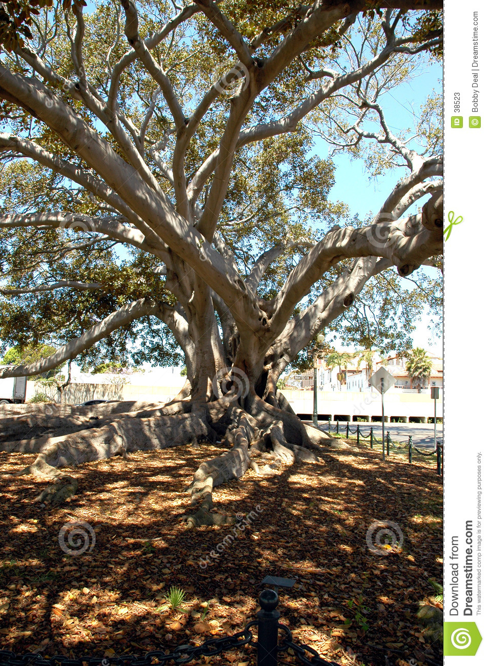 1 figtree