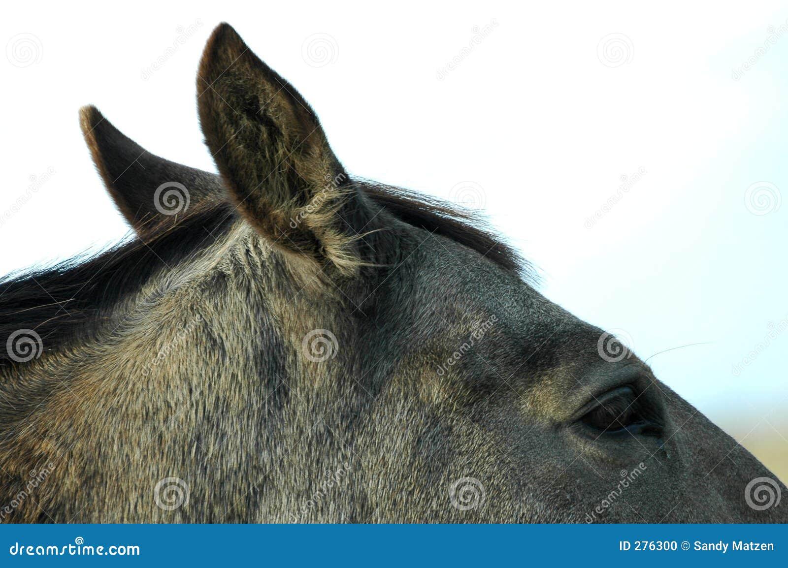 1 hästdel