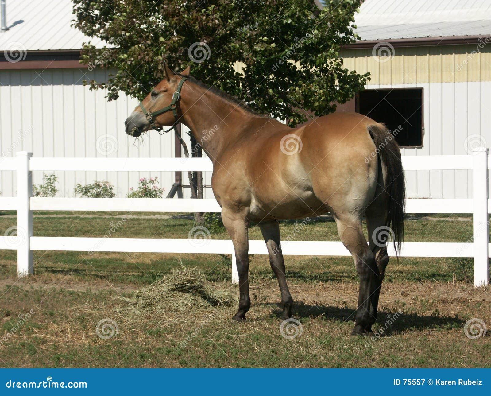 1 konia