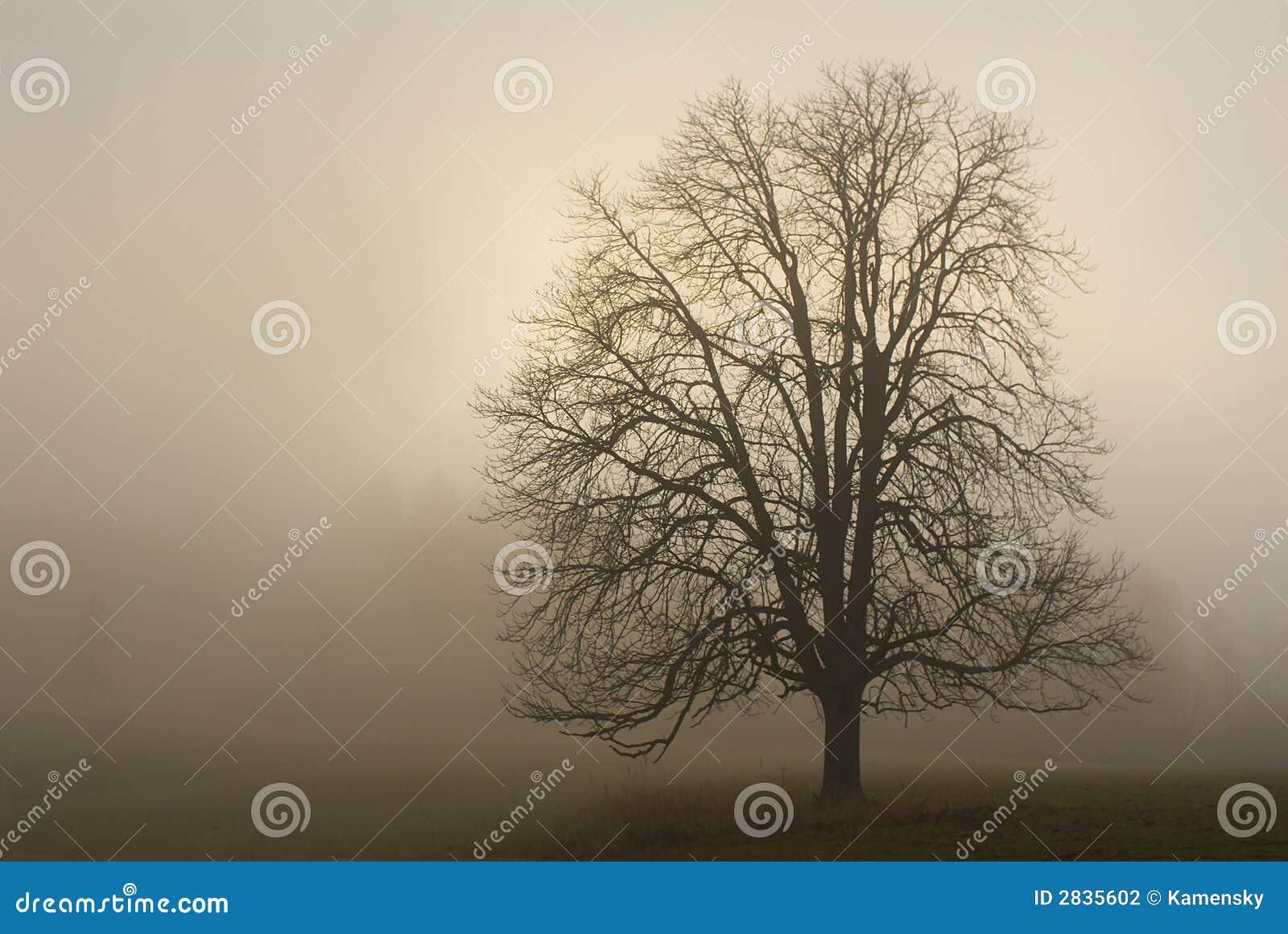 1 mgła.