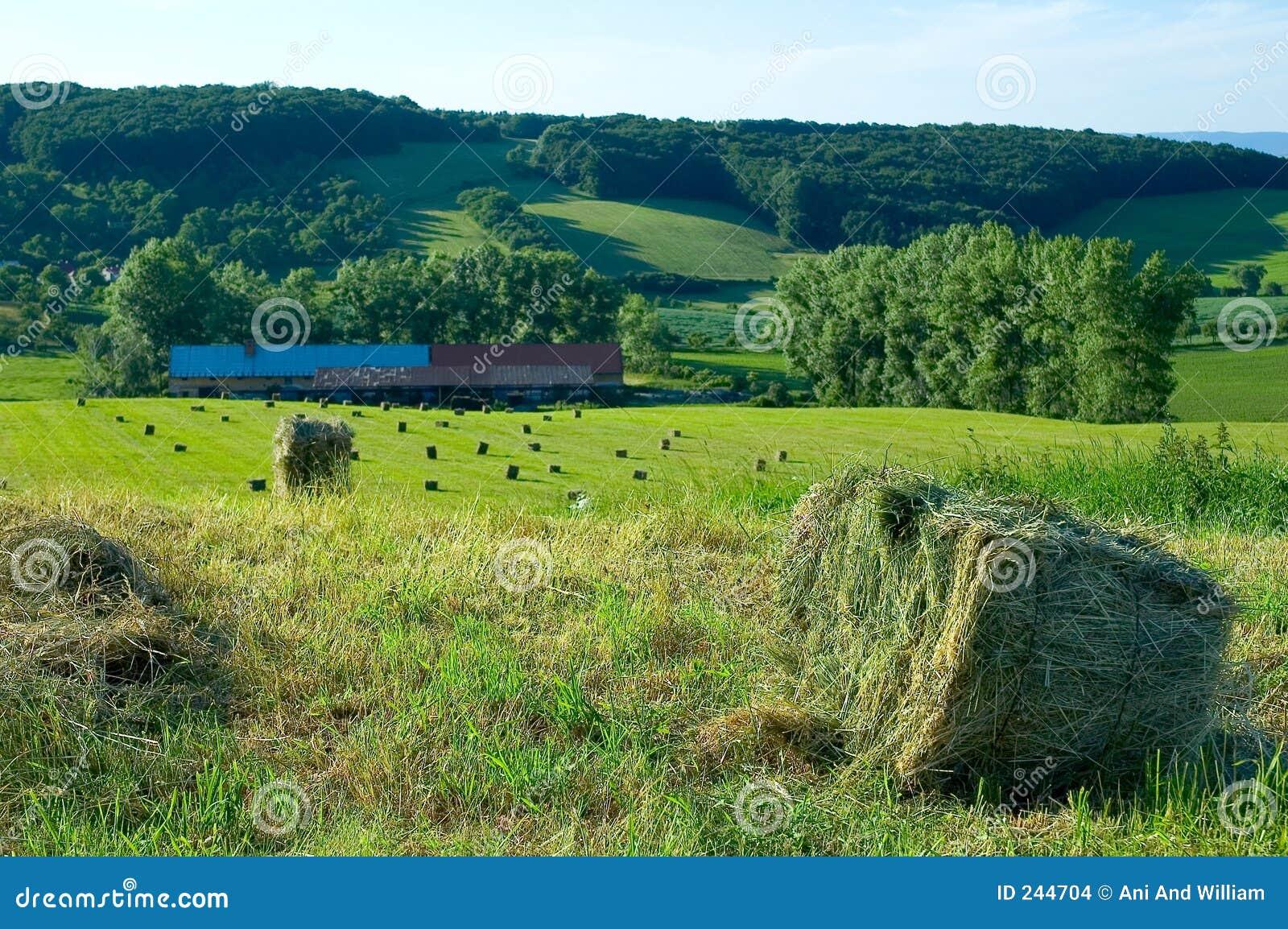 1 tjeckiska lantgårdrepublik