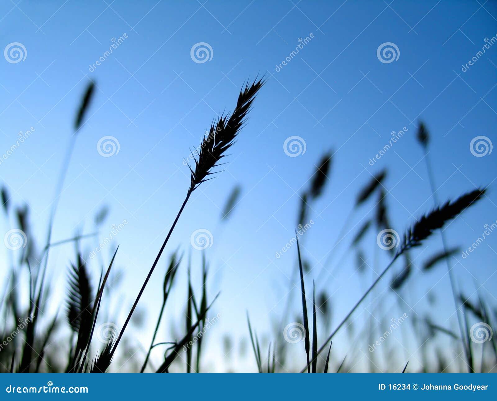 1 växtsilhouette