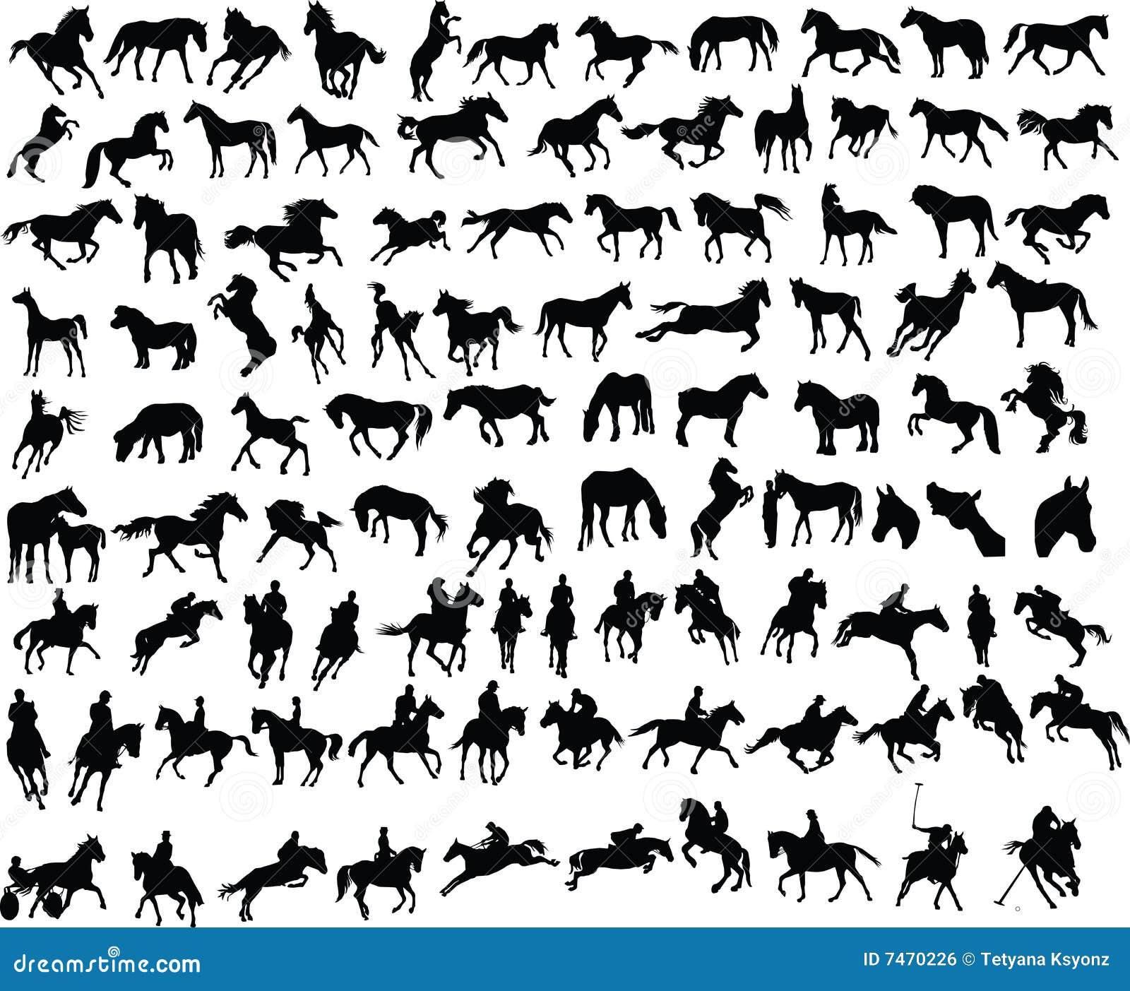 100 cavalli