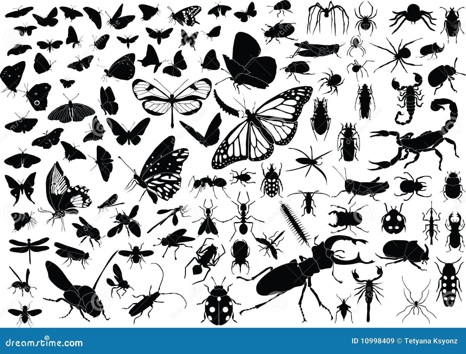 100 insetti