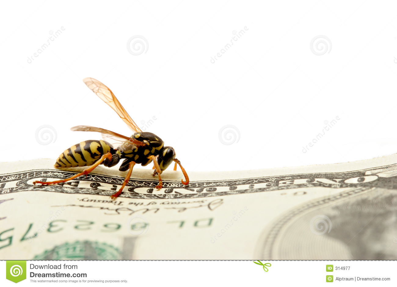 $ 100 wasp rachunku