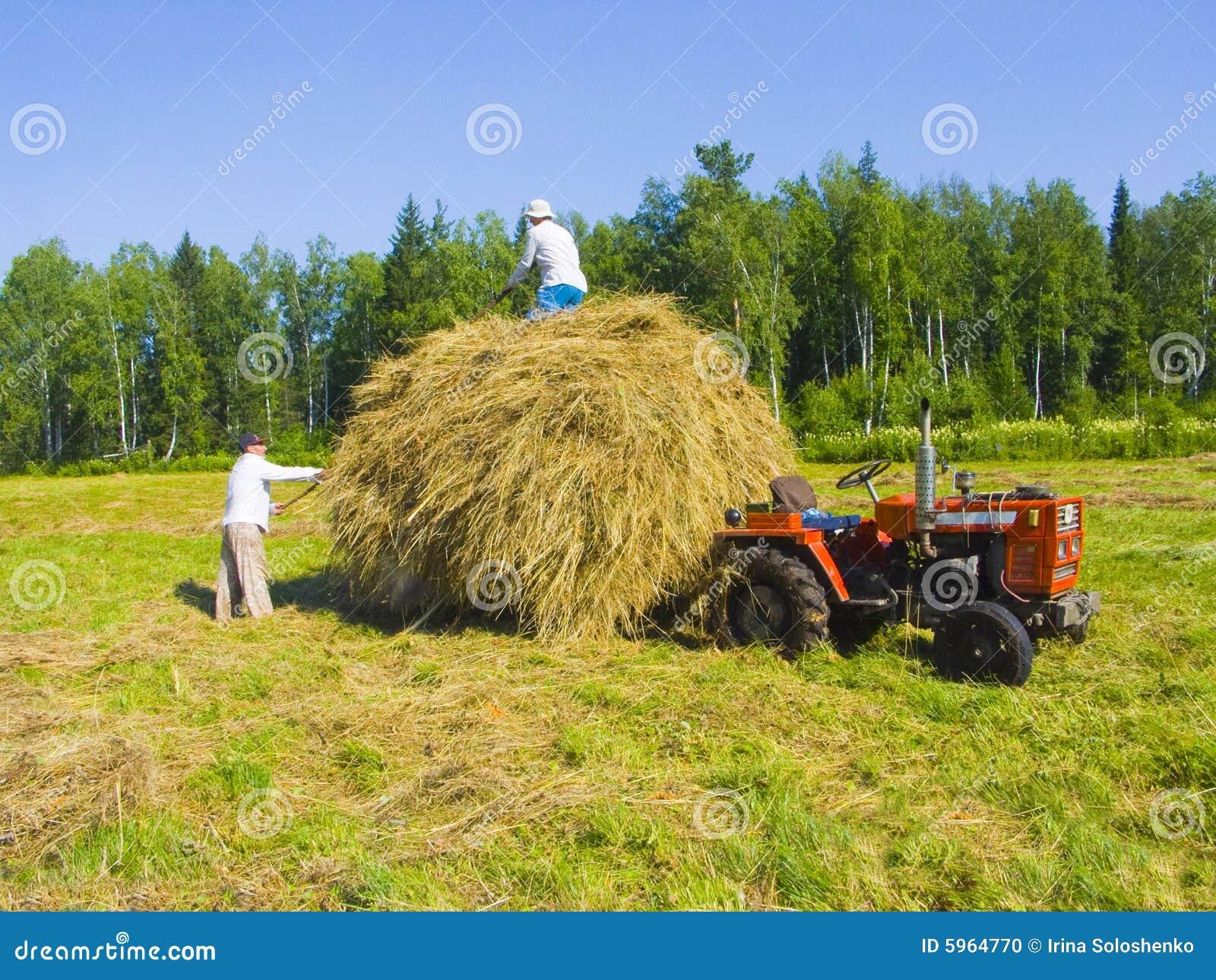 13 κοπή χόρτου Σιβηρία