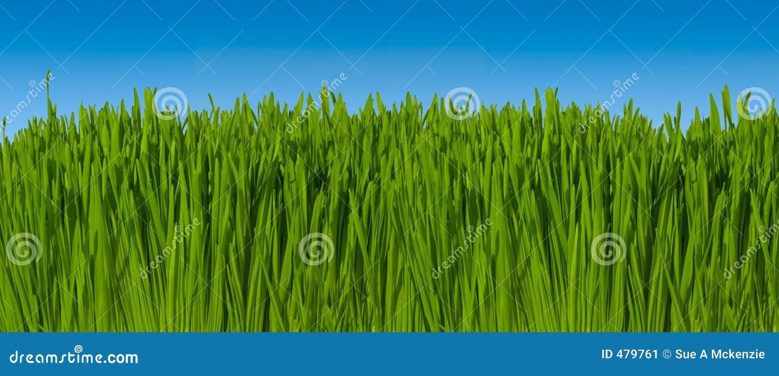 16 против неба макроса inc зеленого цвета травы фокуса предпосылки голубого