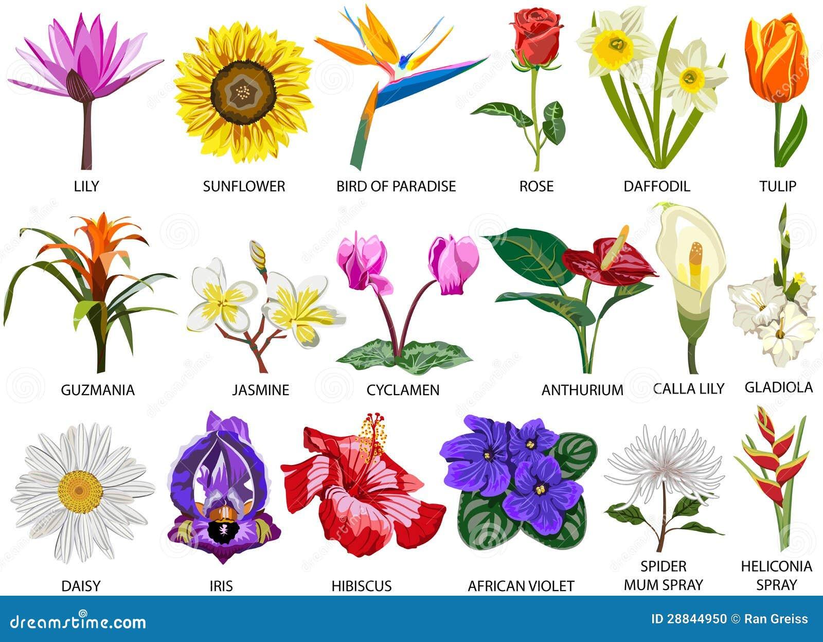 18 art av färgrika blommor