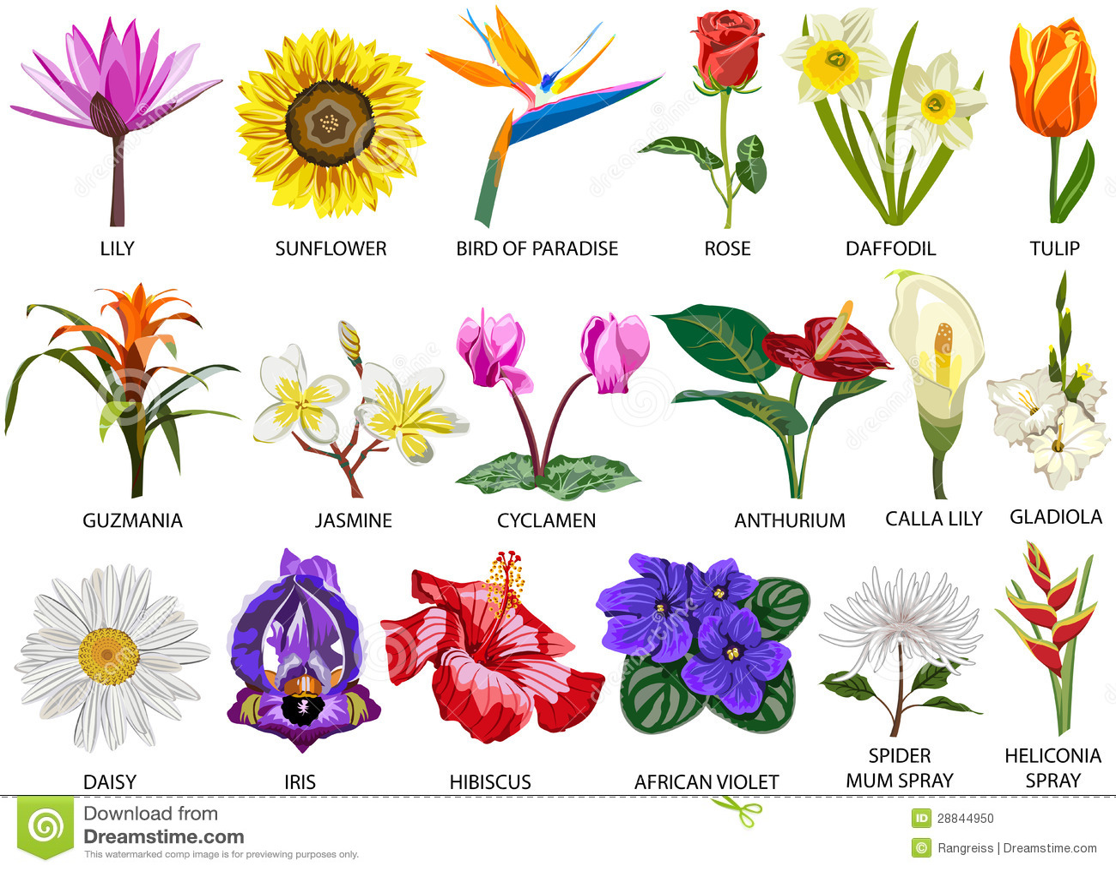 18 species of colorful flowers stock photo image 28844950 for Nombres de arboles en ingles