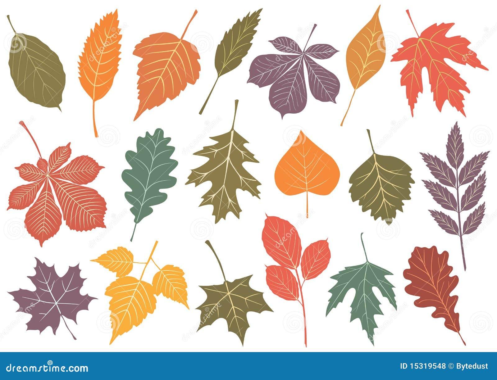 19 jesień ilustraci liść ustawiający wektor