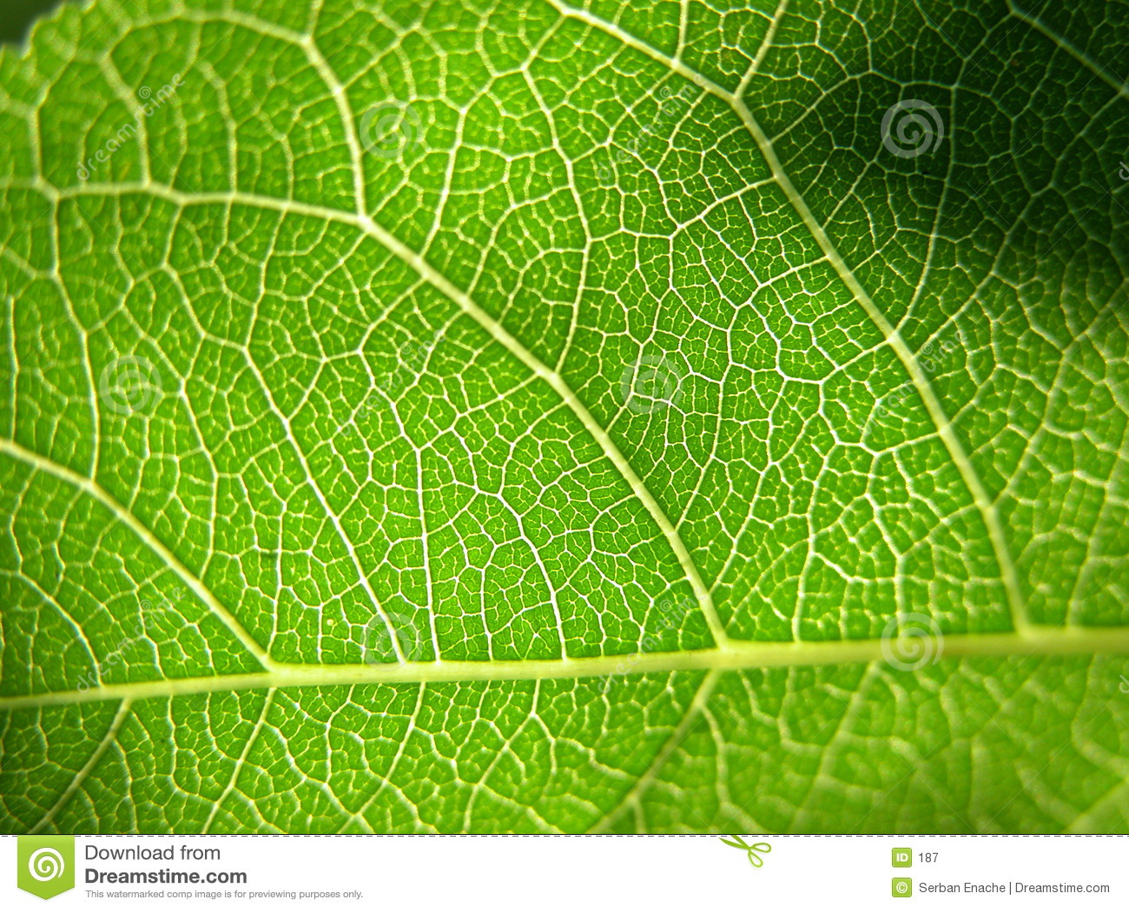 2个特写镜头绿色叶子