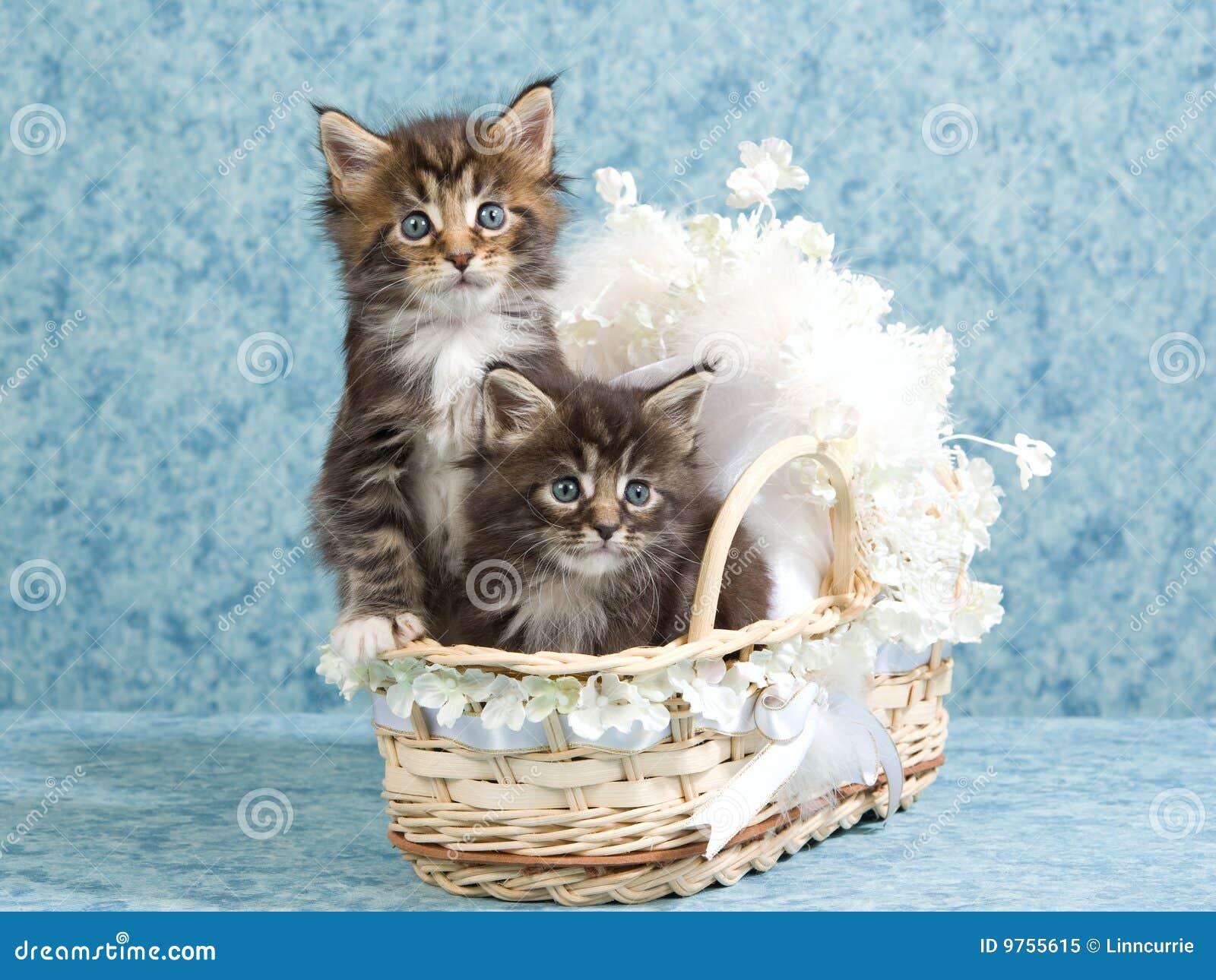 2只小浣熊小儿床逗人喜爱的小猫微型&