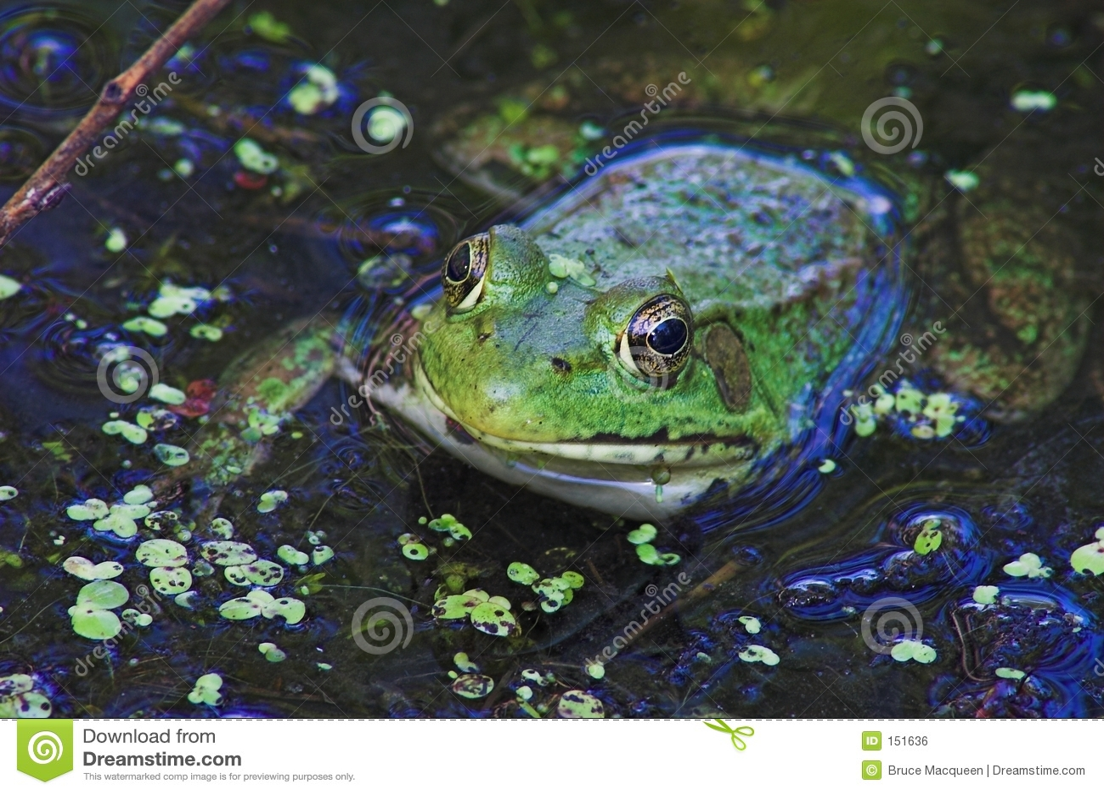 2只眼睛青蛙
