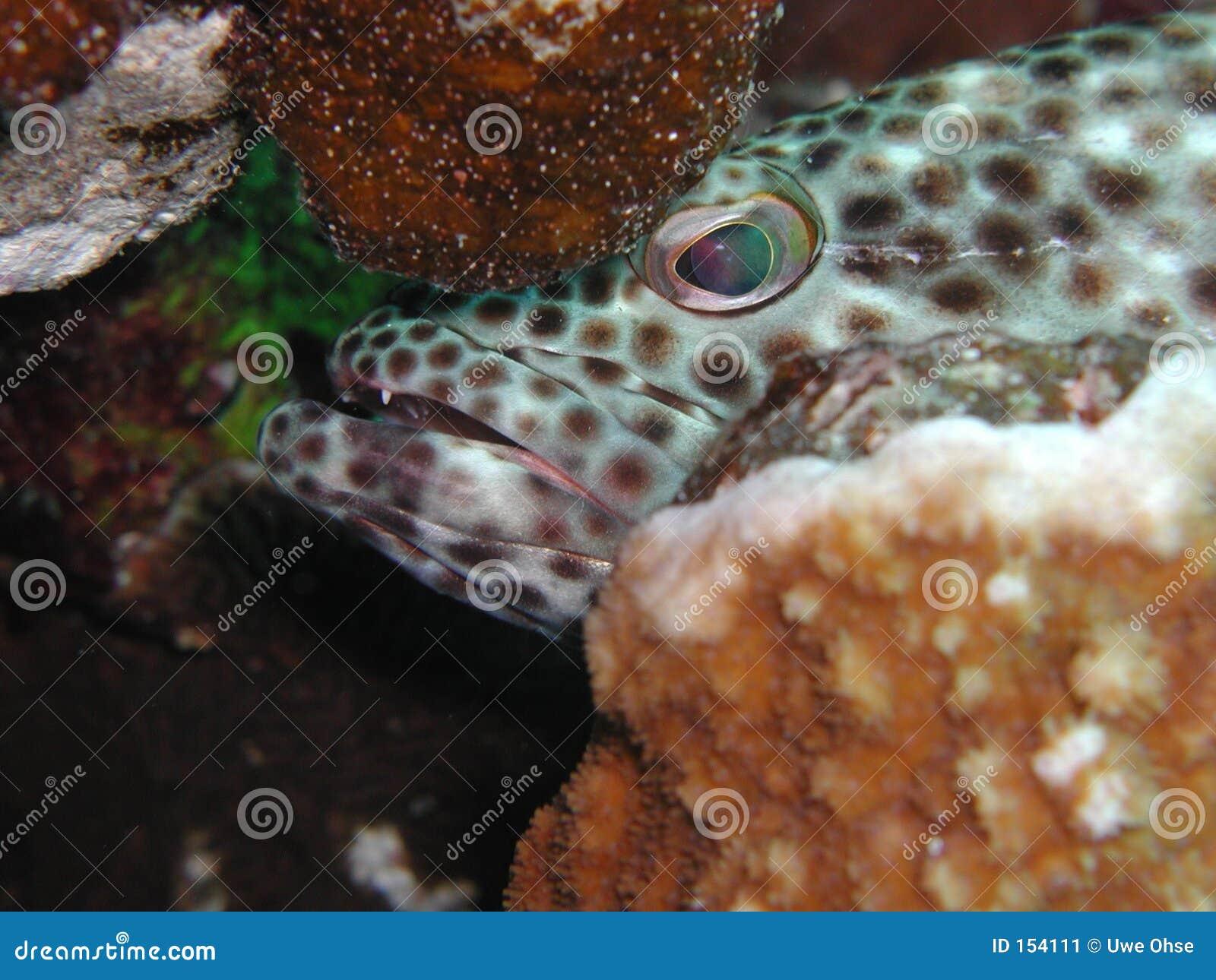 2油腻石斑鱼