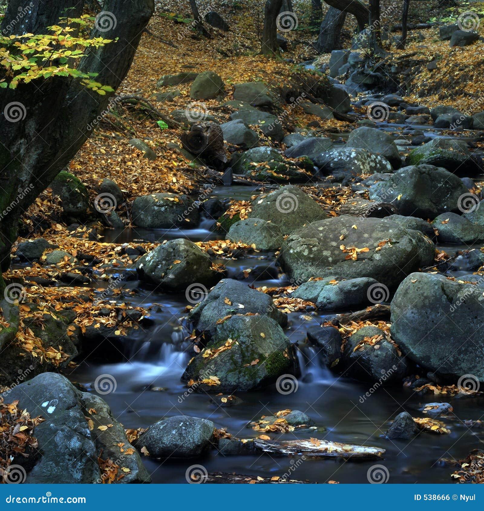 Download 2片叶子水 库存照片. 图片 包括有 自治权, 叶子, 青苔, 瀑布, 迅速, 秋天, 森林, 小河, 级联 - 538666