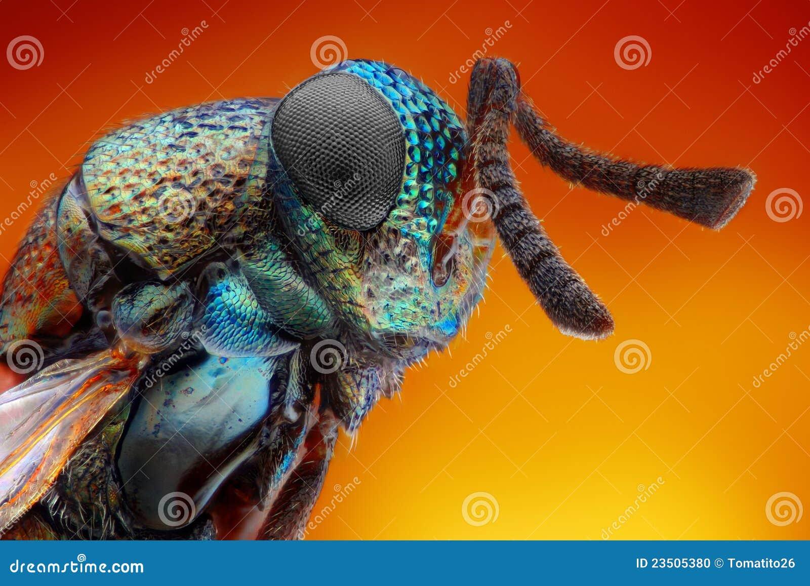 2详述极其mm锋利的研究黄蜂