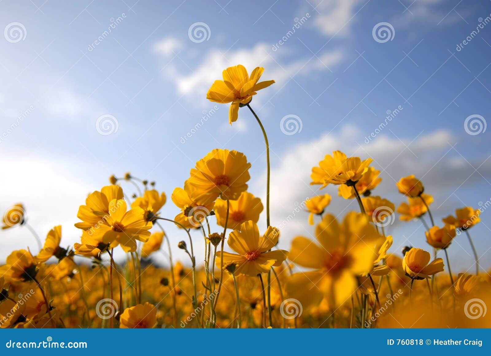 2 όμορφος άγριος κίτρινος &la
