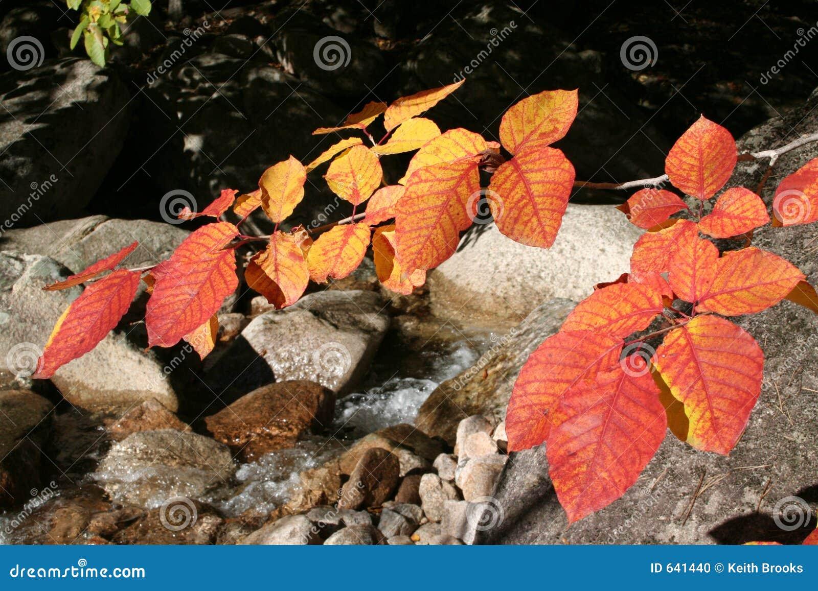 Download 2 листь осени стоковое фото. изображение насчитывающей листво - 641440