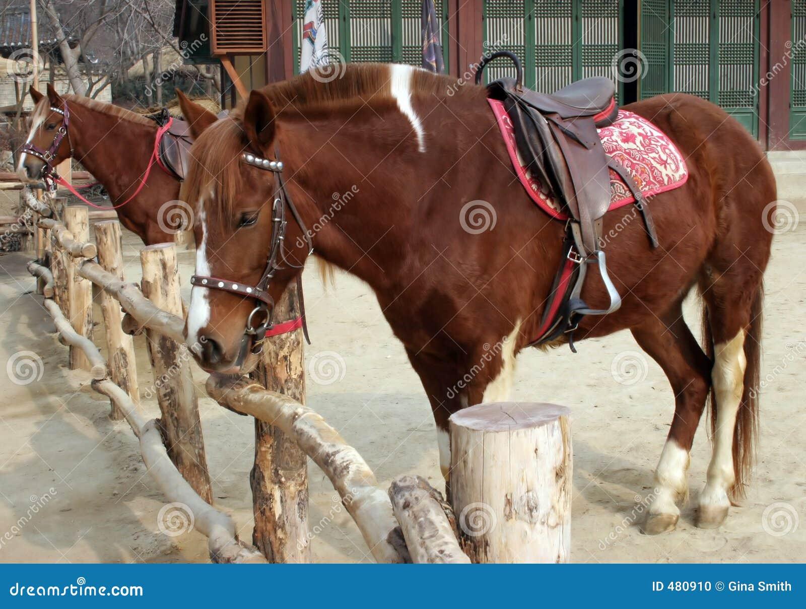 2 оседланных лошади