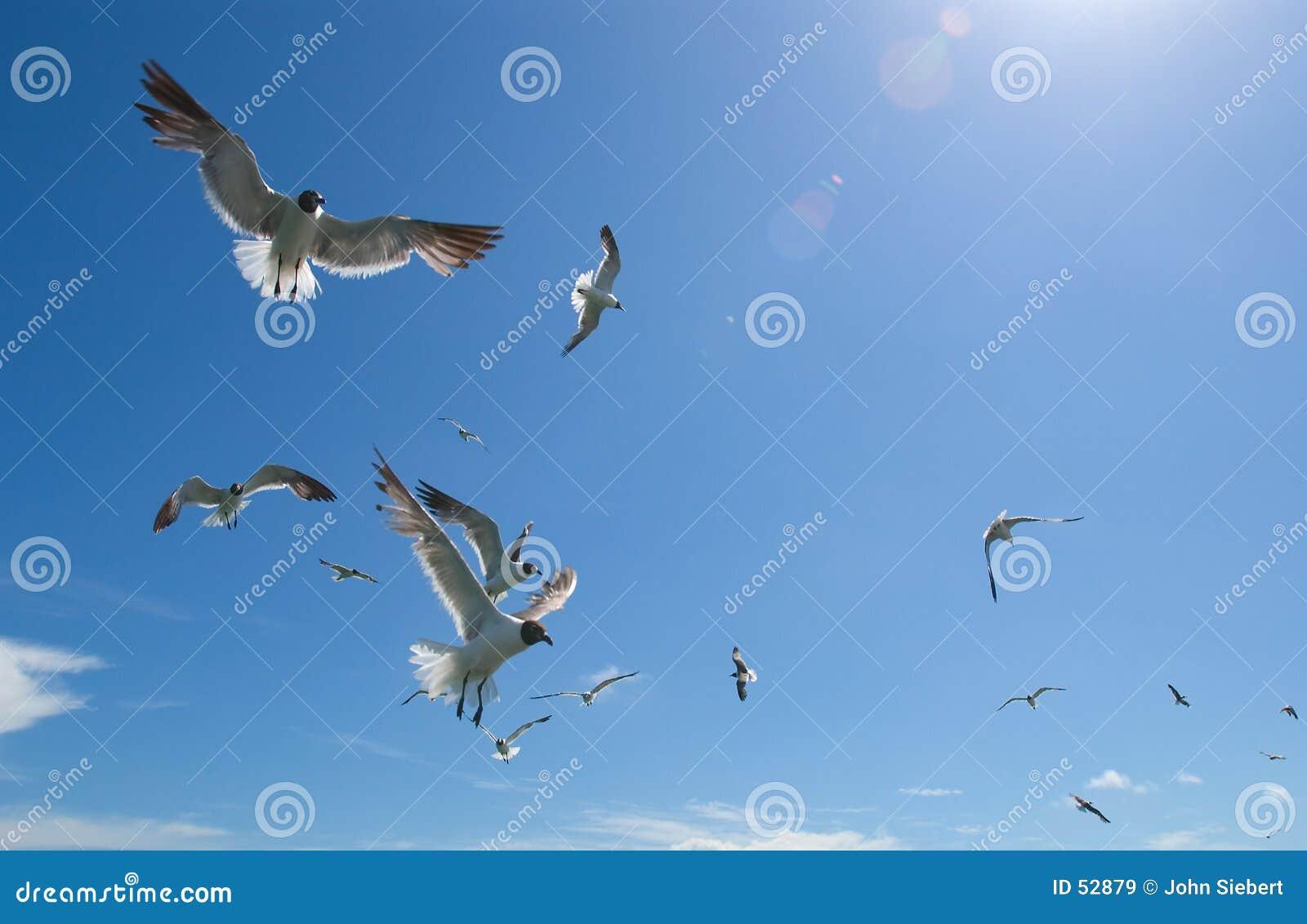 2 чайки