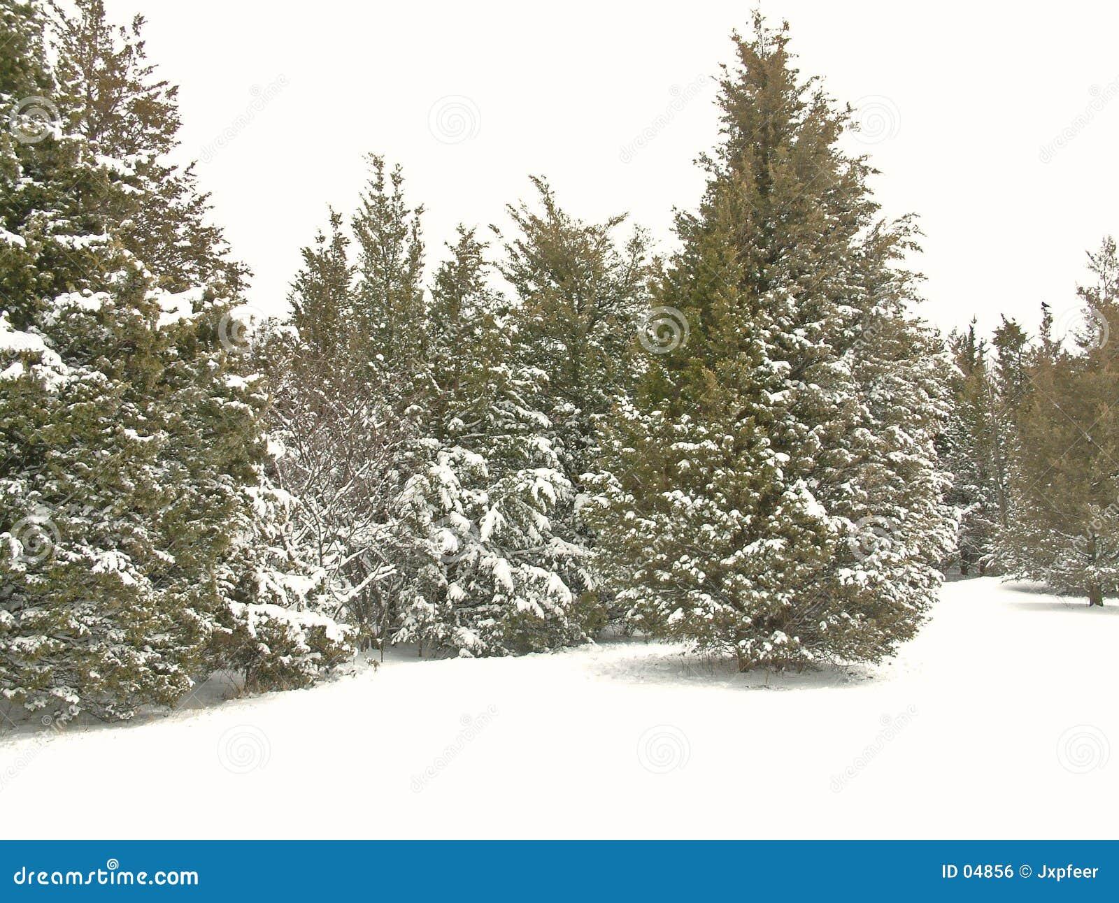 2个公园雪