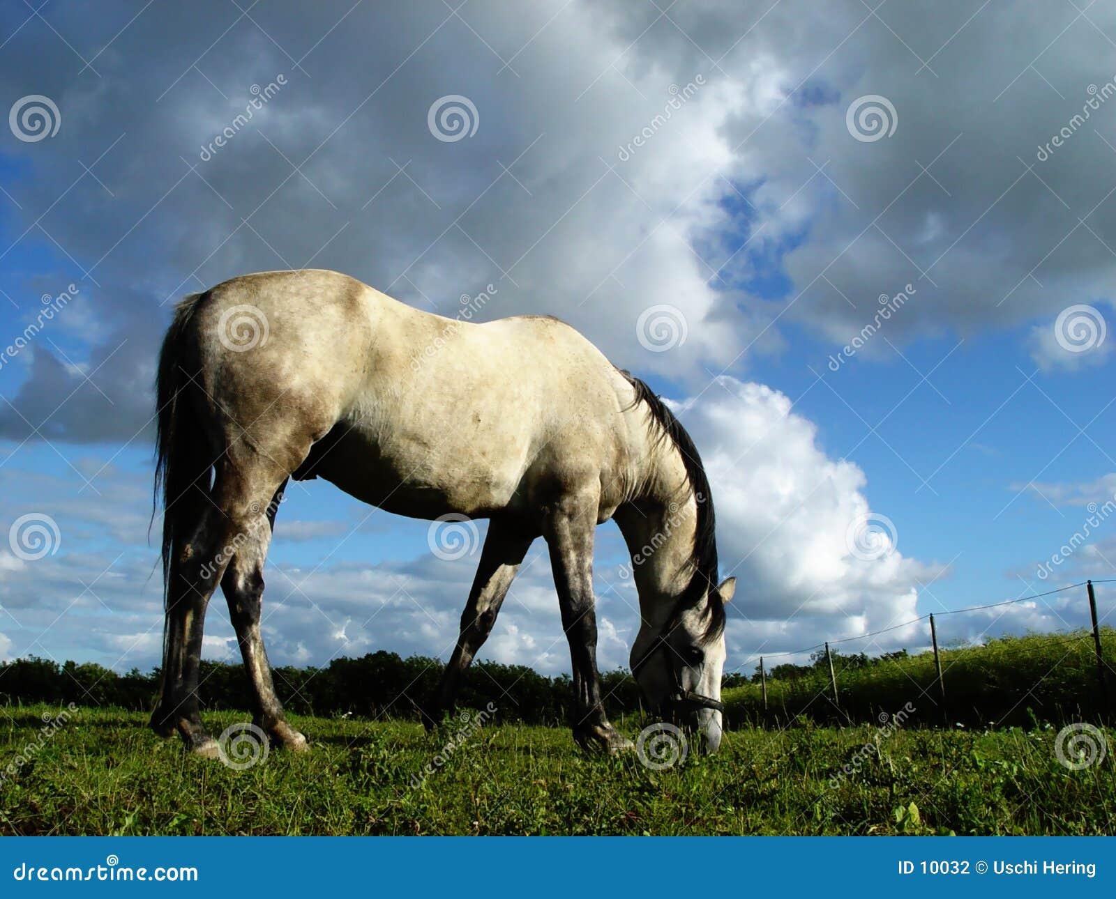 2匹马白色