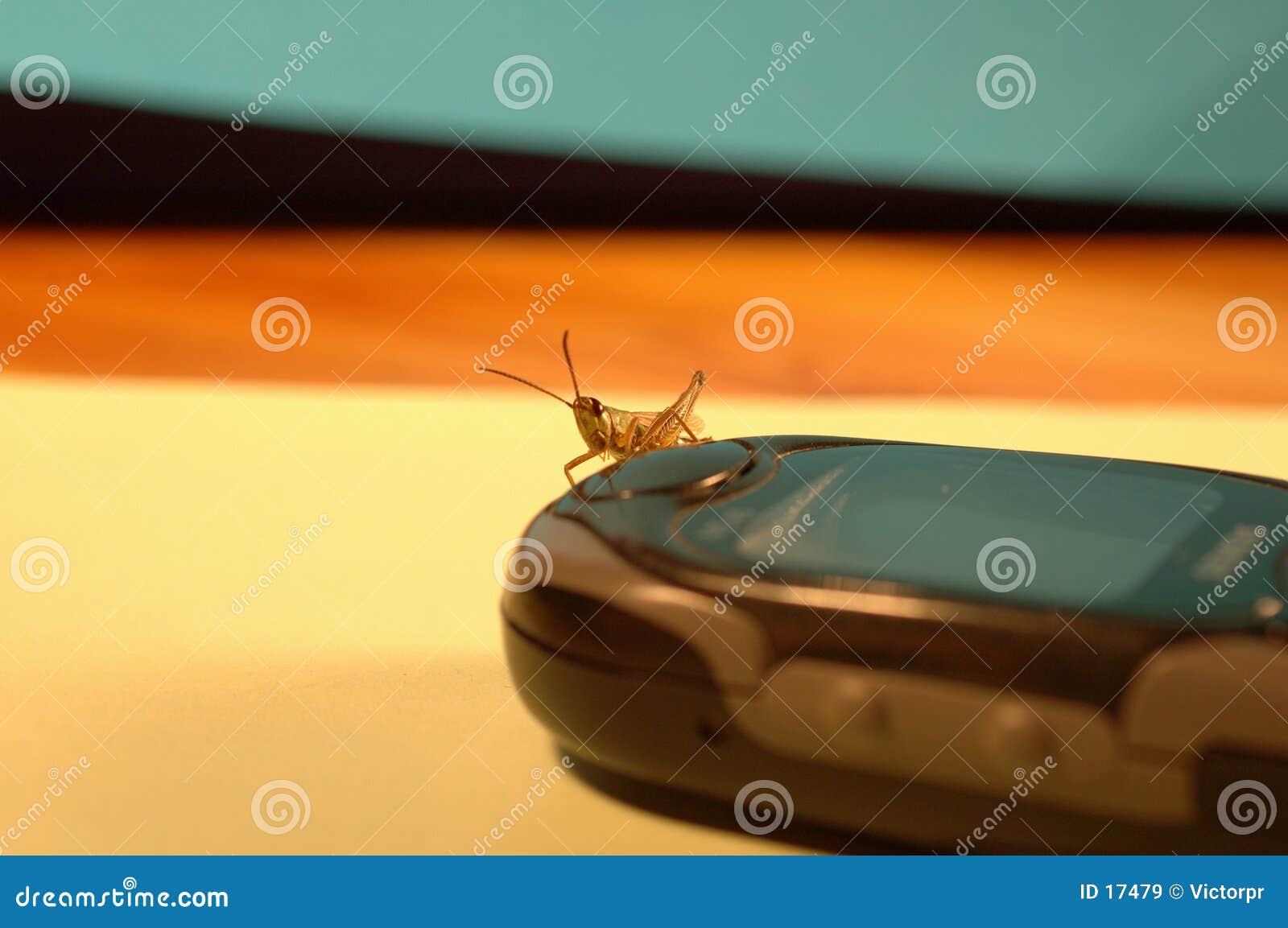 2只蚂蚱移动电话