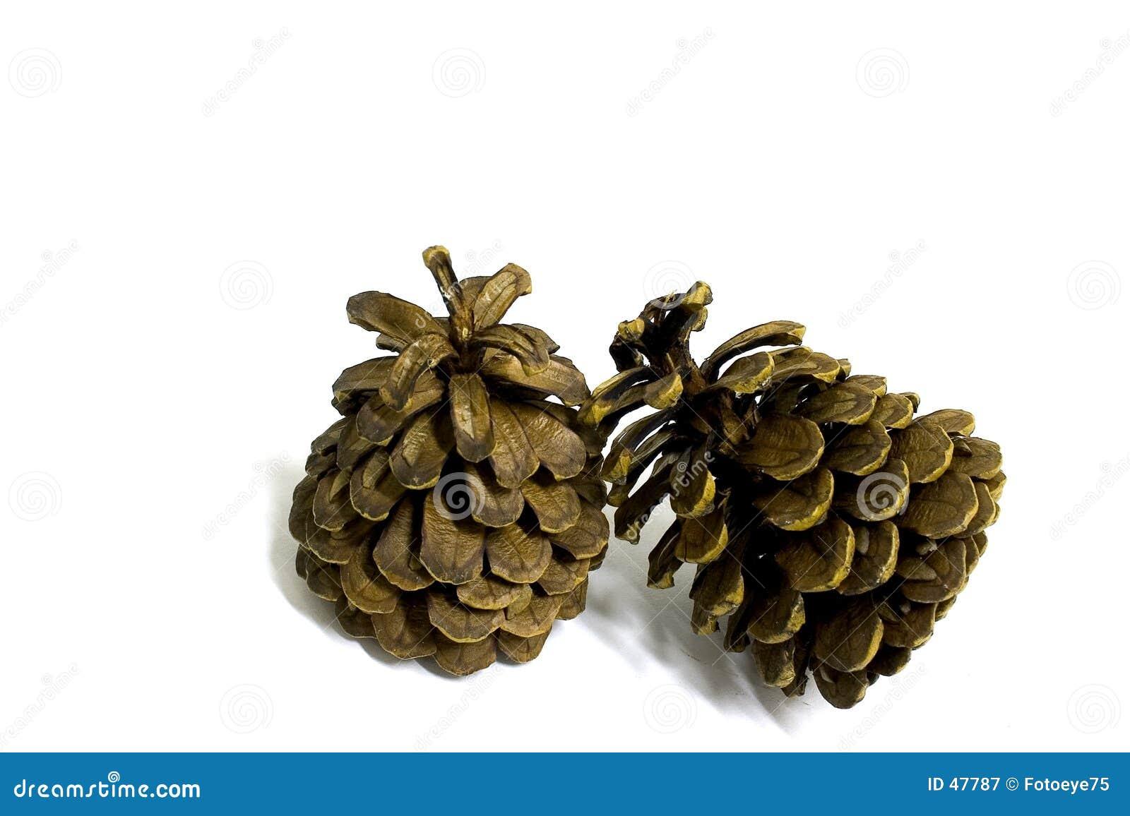 2 conos del pino