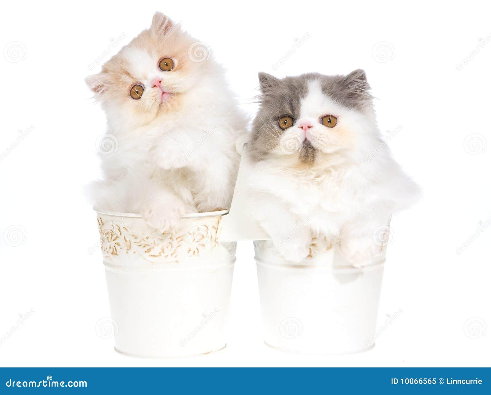 sentry calming collar for cats reviews