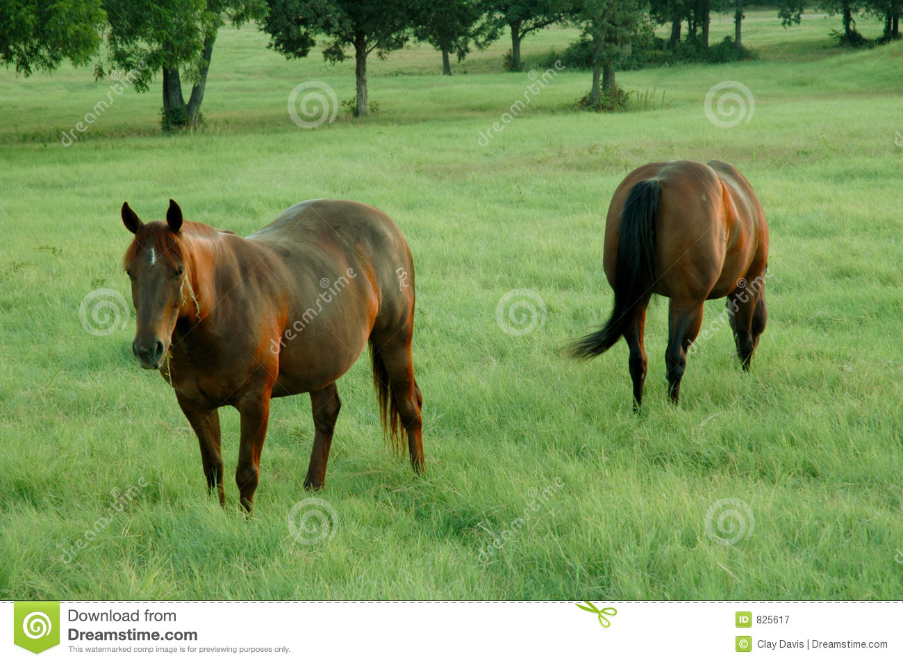2 horses in a pasture