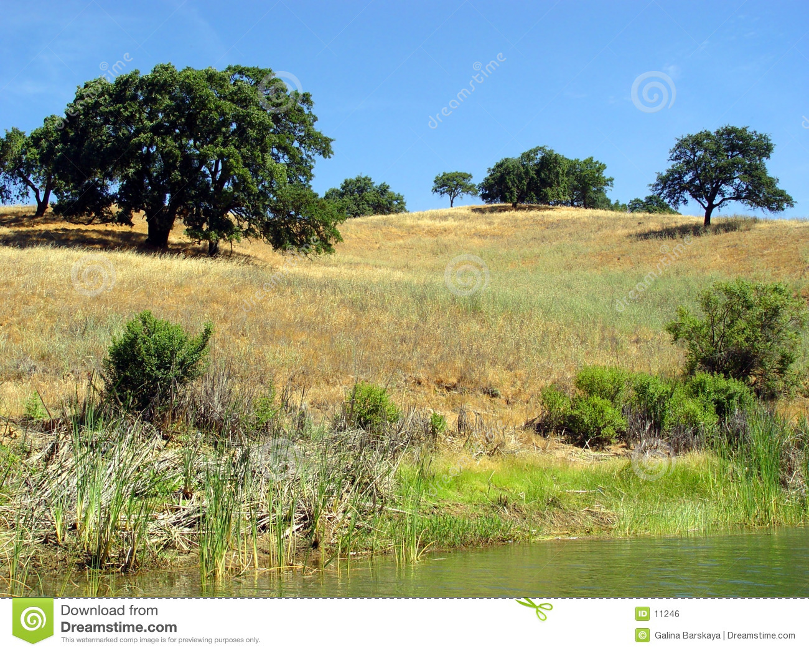 2 Kalifornien kullar