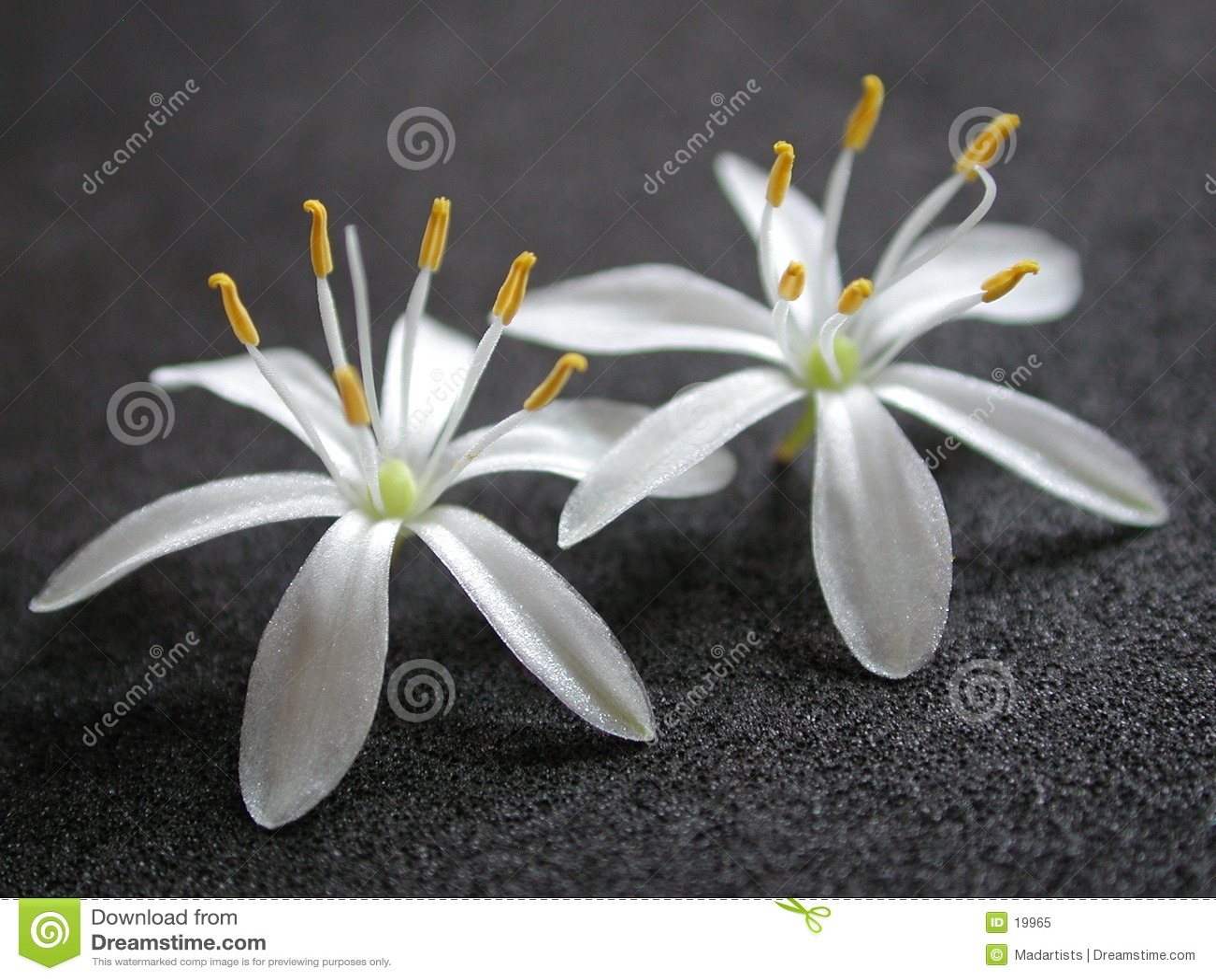 2 kleine Witte Mooie Bloemen