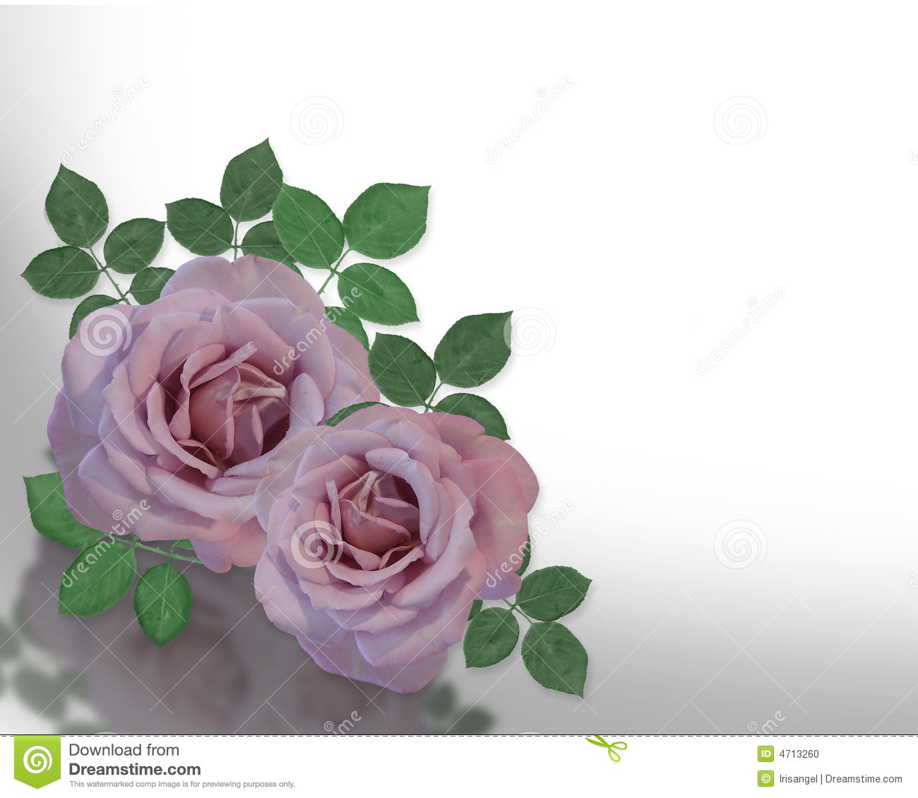 Lavender Rose Background - Wallpaper, High Definition, High ...