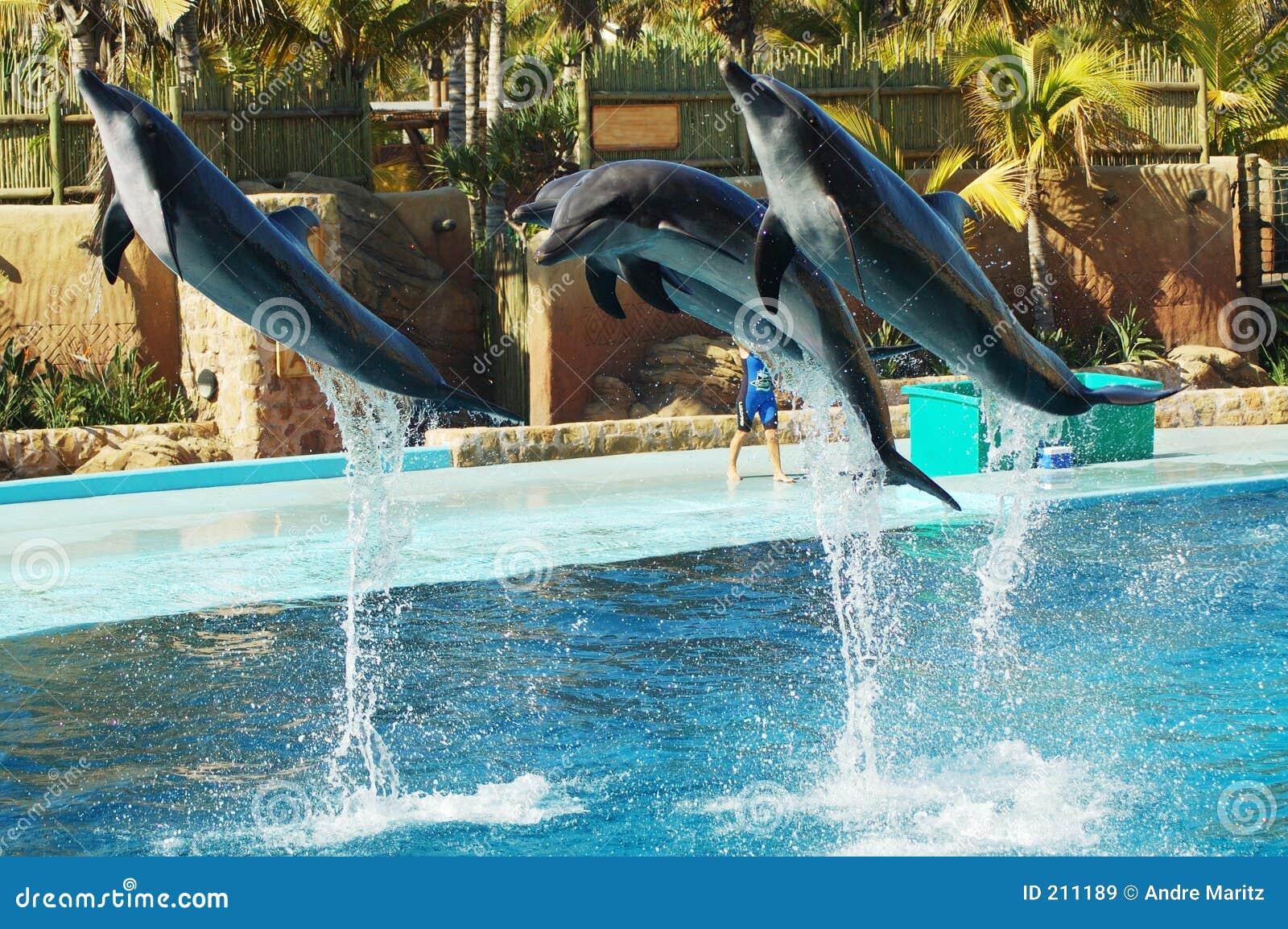 2 lot delfinów