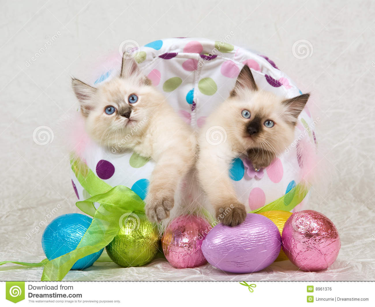 easter backgrounds cat images - photo #23