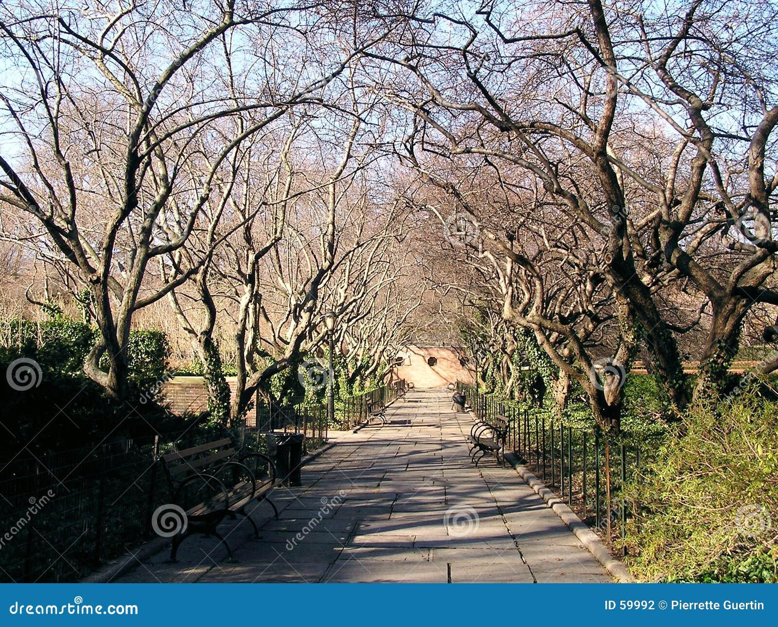 2 scenerii central park